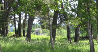 Les forêts de La Chaise-Dieu de saint Robert à aujourd'hui